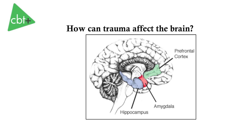 Trauma And The Brain Handout Mclaughlin 2014 Trauma Focused